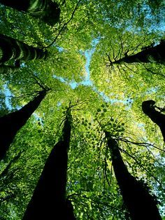 ✿ ❤ looking up through the green trees
