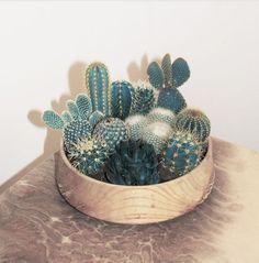 Wooden succulent bowl