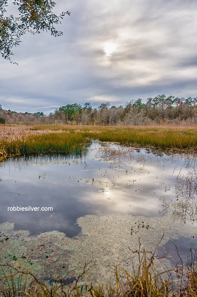 31 best images about landscape photography on pinterest for Landscaping rocks charleston sc