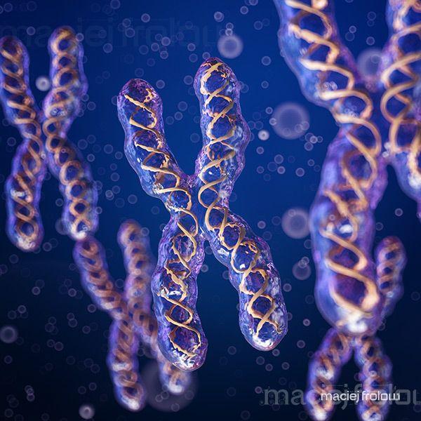 Chromosome X with DNA stripes inside