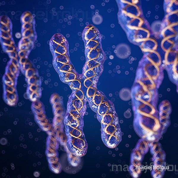 Chromosome X with DNA stripes inside