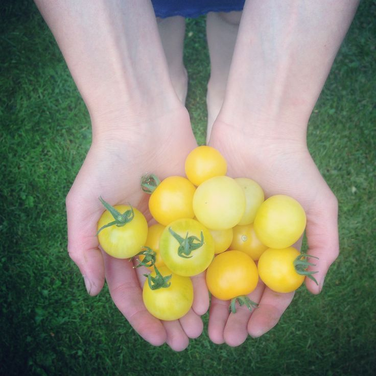 Cherry tomatoes from my home garden. I love this little ones They are so sweet and juicy!
