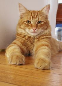 Free Home Made Cat Food Recipes
