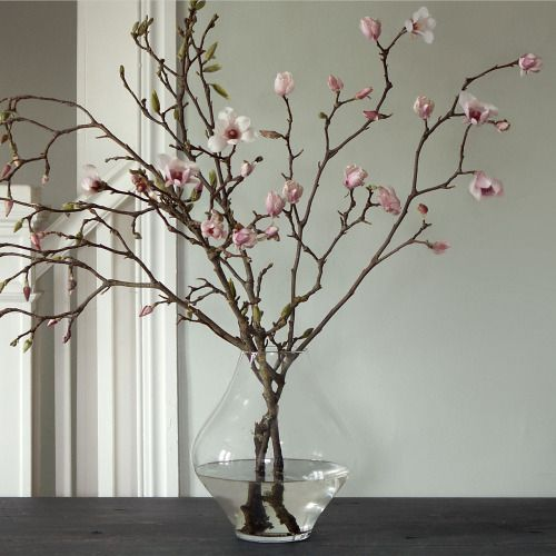 Tulip magnolia branch | Photo via Shop Terrain