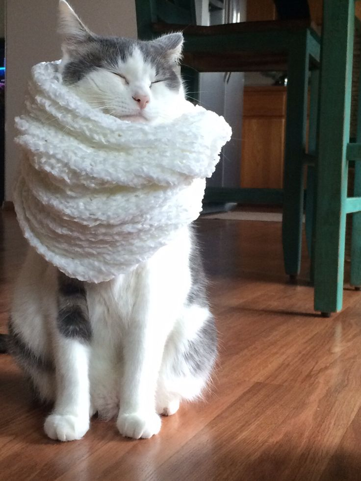 I gave my cat a mini scarf because he was cold- hes so cozy he has not stopped purring