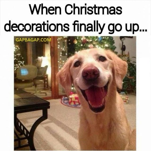 Funny Meme About Christmas Ft Funny Dog Christmas Memes Funny