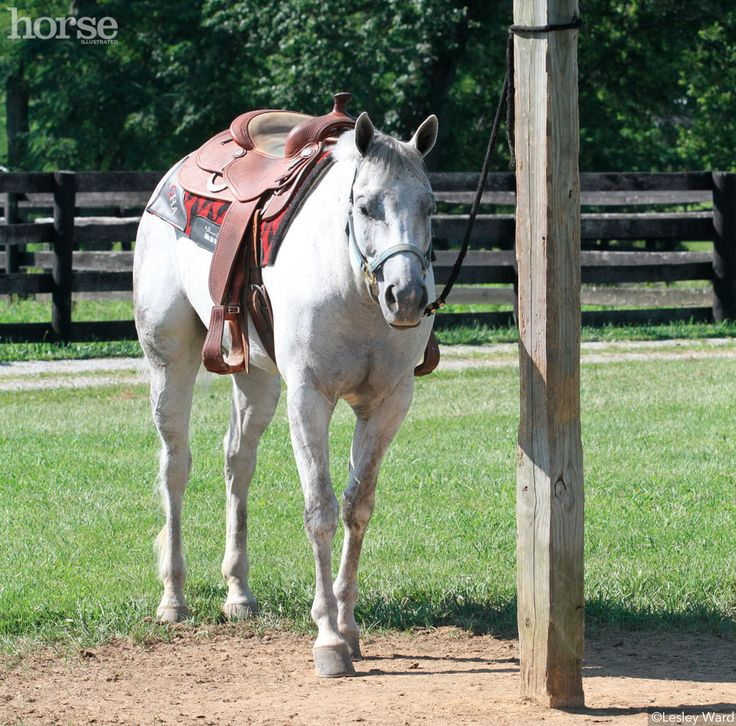 Go back to basics to teach your horse to relax when tied.