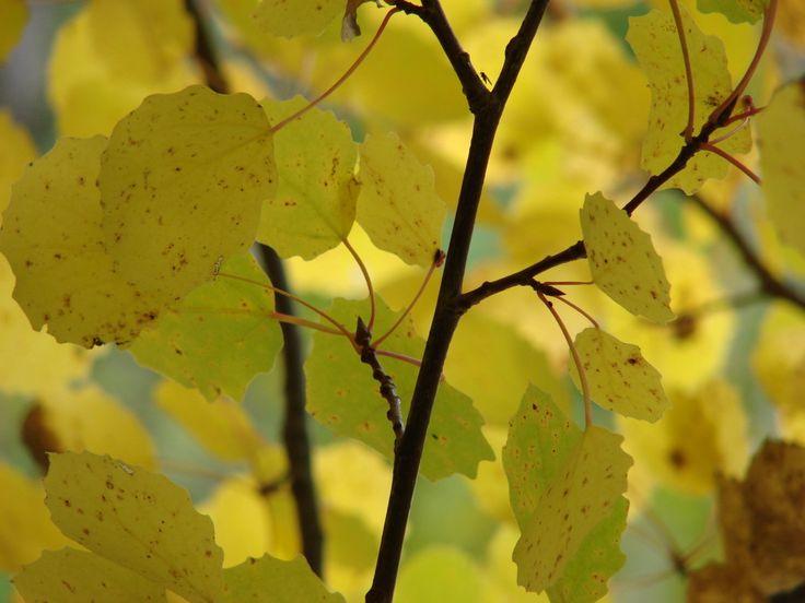 Uppdrag 4A:NATURSPANARNA Gå på knoppjakt på hösten! Hitta knopparna, som ska slå ut nästa vår! De var färdiga redan i somras! Här får du svaren och hittar fakta: http://naturspanarna.se/bladeniskogenhosten-2/