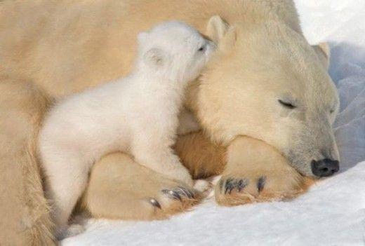 Momma, are you awake yet?