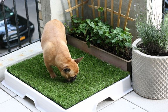 Green Thumb | Balcony for dogs, Dog toilet, Dog rooms