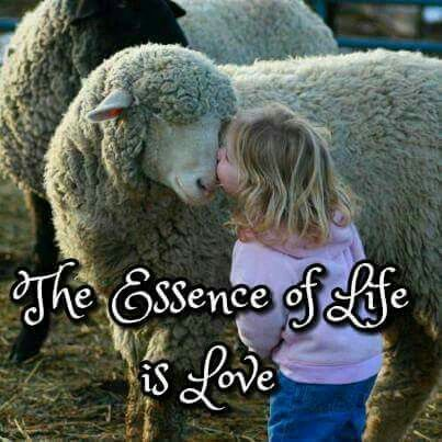 The essence of Life is Love