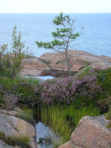 GETA, Åland,Finland - Tiny rock pools with their natural vegetation near Havsvidden in the commune of Geta.