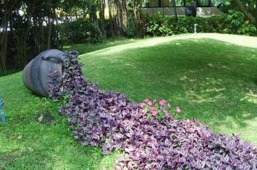 Наиболее эффектны стелющиеся растения голубого или фиолетового оттенка, которые сохраняют свою декоративность весь сезон.