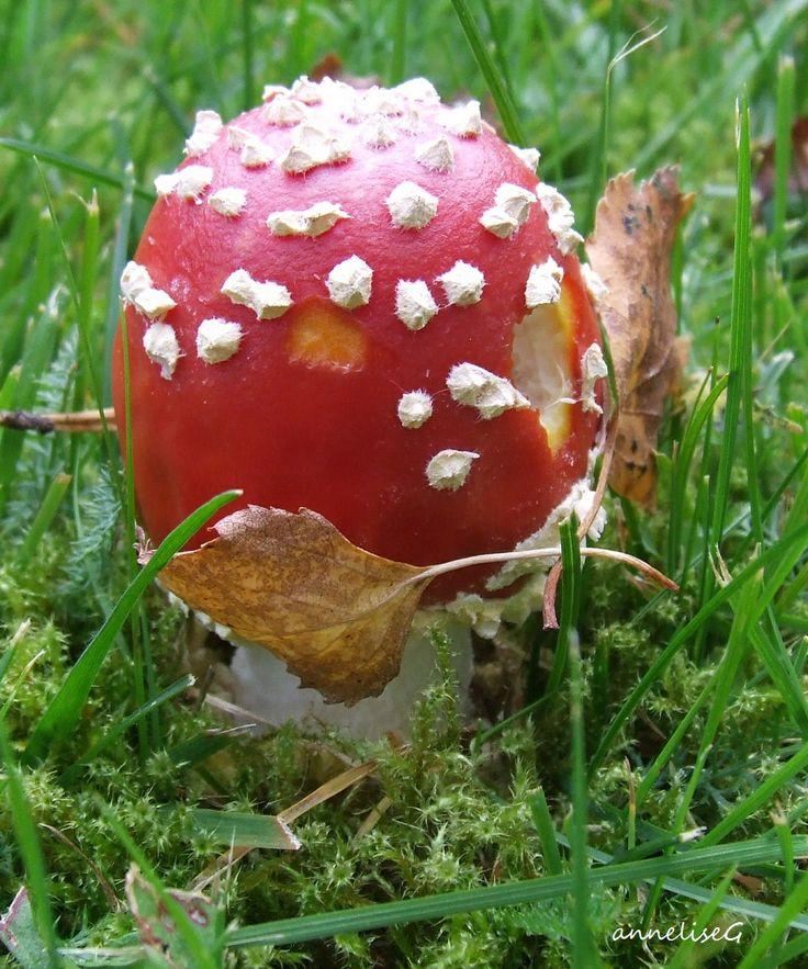Mushroom - toadstool - poison!