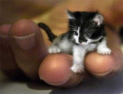 A miniature kitten?!  CAN I PLEASE HAVE ONE?!  I <3 meows...