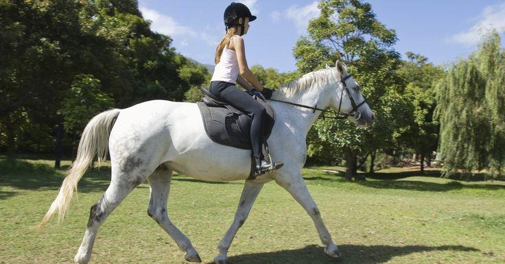 Como aumentar o passo de um cavalo. Quando você ordena ao cavalo aumentar o passo, ele deverá percorrer a mesma distância com um número menor de passos. Ele não deverá aumentar a velocidade ou o ritmo, que deverá manter-se regular. Esse exercício não deve ser feito com um cavalo novo ou que tenha recebido pouco treino, pois ele pede bastante concentração e entendimento de seu ...