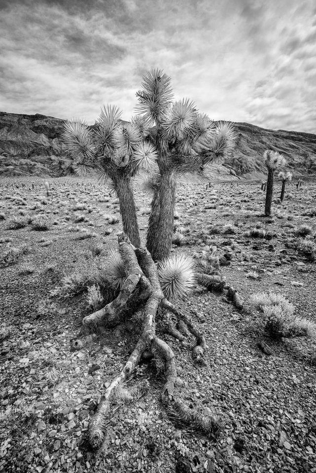 Death Valley Infrared (7)