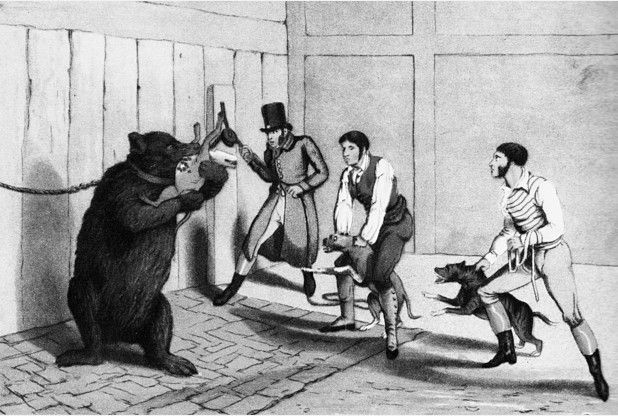 Cambridge's not so well known macabre history.  http://www.cambridge-news.co.uk/Cambridge-s-nasty-history-bear-baiting-gruesome/story-26088923-detail/story.html