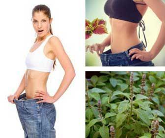 tips para bajar de peso sin hacer dieta