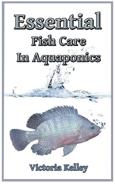 945 best images about aquaponics on pinterest fish for Easy to care for fish