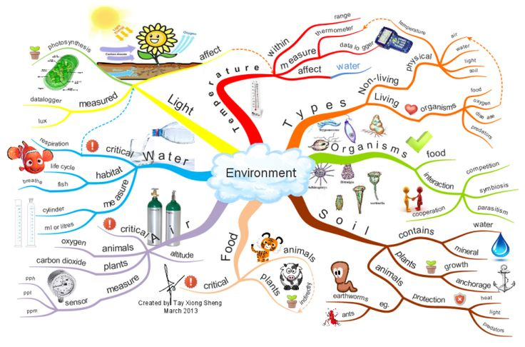 Environment Mind Mapping Amp Memory Techniques For Kids