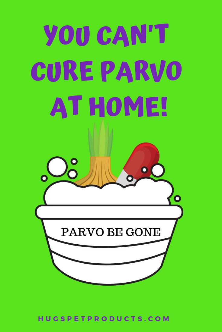 Parvo be gone find out how httpswwwhugspetproducts