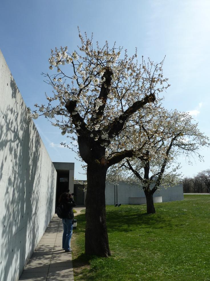 Conference Pavilion by Tadao Ando. Vitra Campus (Weil am Rhein , Germany)
