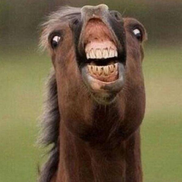 Funny Unphotogenic Animals – 70 Photo