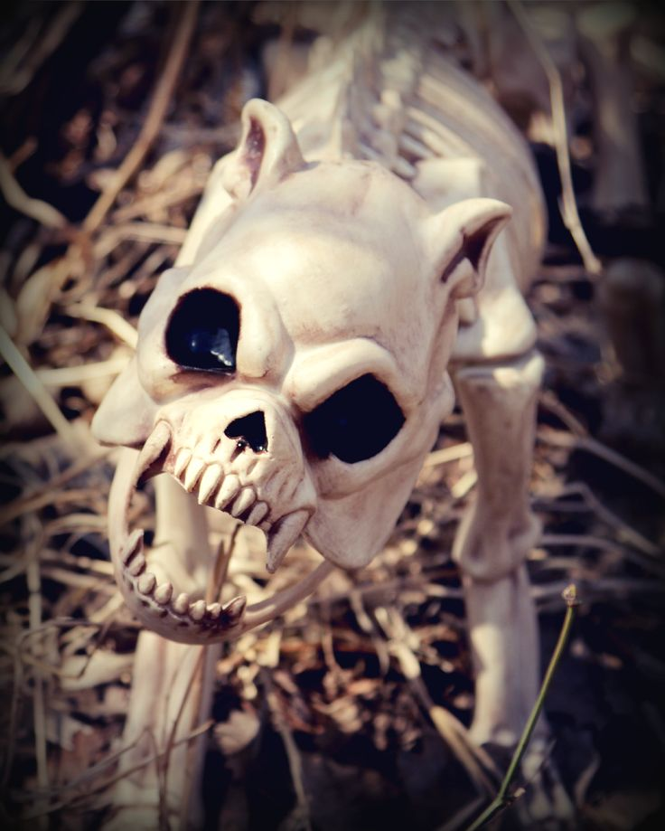 56 best Spooky Halloween images on Pinterest Halloween prop - halloween decorations skeletons