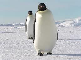 Emperor Penguin Facts For Kids | Emperor Penguin Habitat & Diet