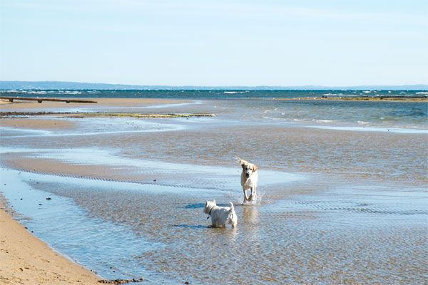 Rickett's Point Dog Beach