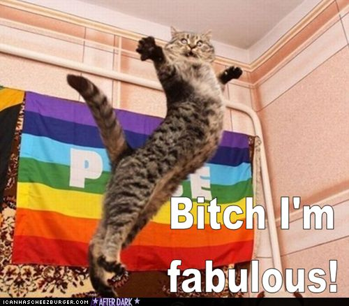 lol: Funny Cat, Stay True, Nyan Cat, Funny Stuff, Funny Animal Photos, Nyancat, Kitty, I'M Fabulous, Gay Pride