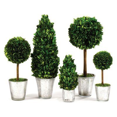 Napa Home And Garden Preserved Boxwood 5 Piece Ball And Cone Topiary Set    7566PG