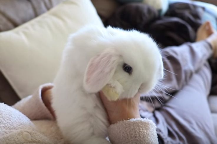 This Fluffy Bunny's Playtime Is The Sweetest Thing You'll See Today - http://www.lifedaily.com/this-fluffy-bunnys-playtime-is-the-sweetest-thing-youll-see-today/