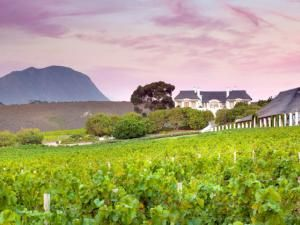 Visit the vineyards at Bouchard Finlayson and take a walk in the fynbos.