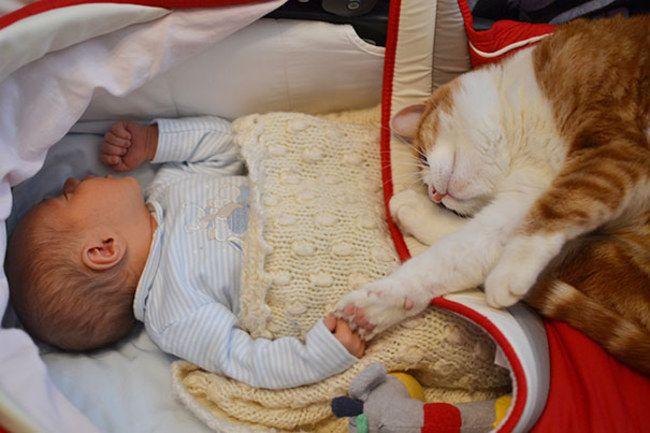 Niño con su gato dormidos en un cunero