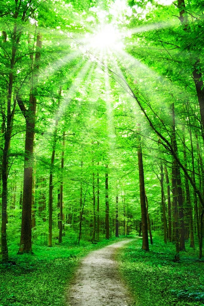 #Foresta #Garbelotto & #Masterfloor rispettano l'ambiente