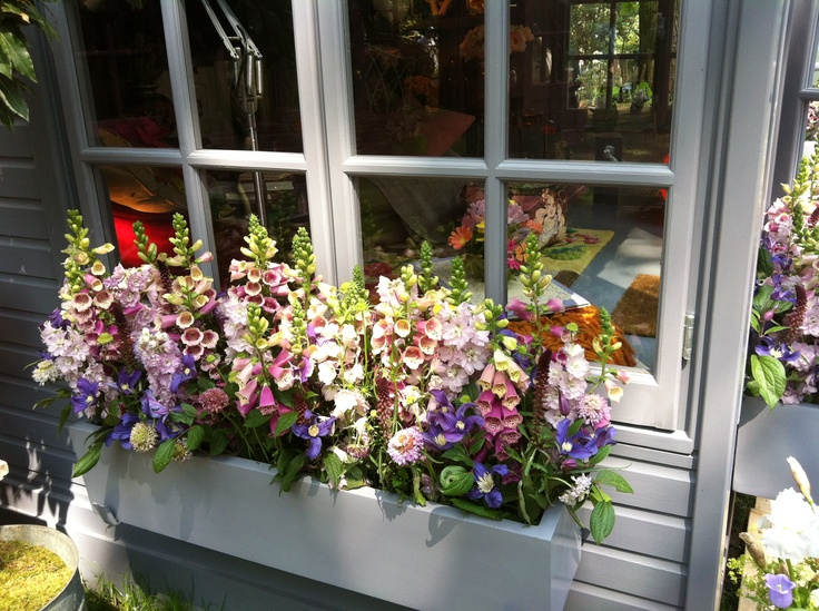 Top notch window box from Wild at Heart