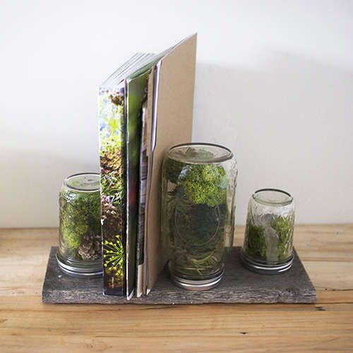 Tiny Office Terrariums - Bring Nature to Your Office with the Design Sponge DIY Office Terrarium (GALLERY)
