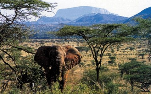 Kenya.: Elephants, Buckets Lists, Kenya Safari, Travel Dreams, Wild Things, Luxury Travel, Images, Africa Mt, Lists Locations
