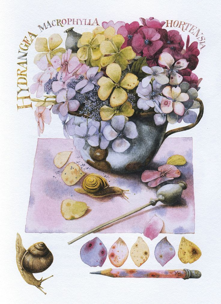 Marjolein Bastin - Still Life with a Snail from 'Nature Sketches'