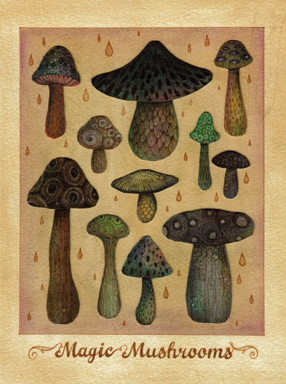 Magic Mushrooms - Vladimir #Stankovic  #mushroom #drugs #High #SUPERHIGH