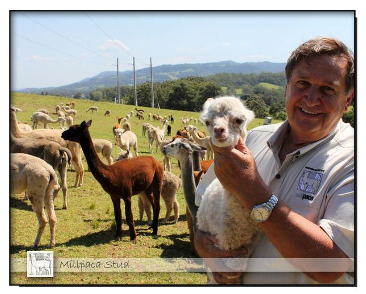 ABC Rural February 26th, 2014 Exporting our alpacas to Turkey for their textile industry.