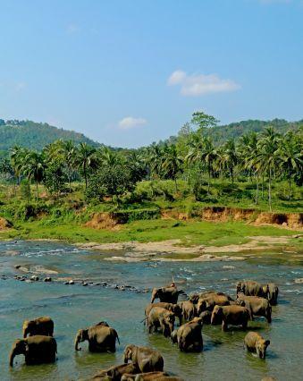 © Marine Jacquemet - L orphelinat des éléphants de Pinnawela - Sri Lanka | #Voyage #Travel #SriLanka