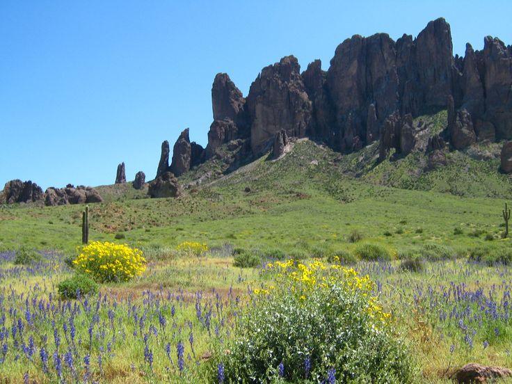17 Best Images About Desert Flowers On Pinterest Utah