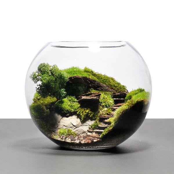 biosphere terrarium steps desks pinterest products and terrarium. Black Bedroom Furniture Sets. Home Design Ideas
