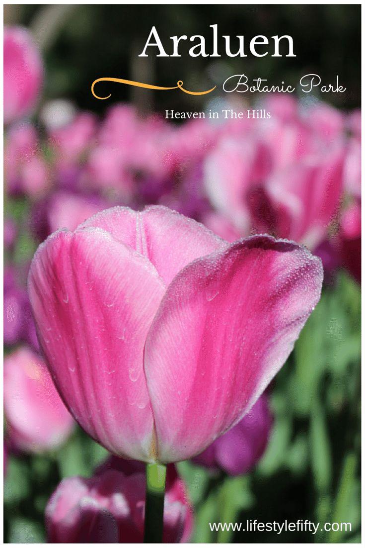 Heaven in the Hills: Araluen