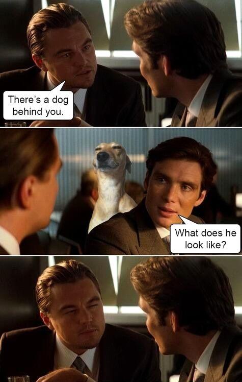 Best. Meme. Ever.