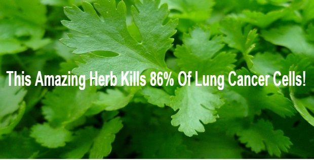 Apigenin, a naturally taking place plant flavone abundantly present in this herb which has actually been discovered to eliminate as much as 86% of cancer...