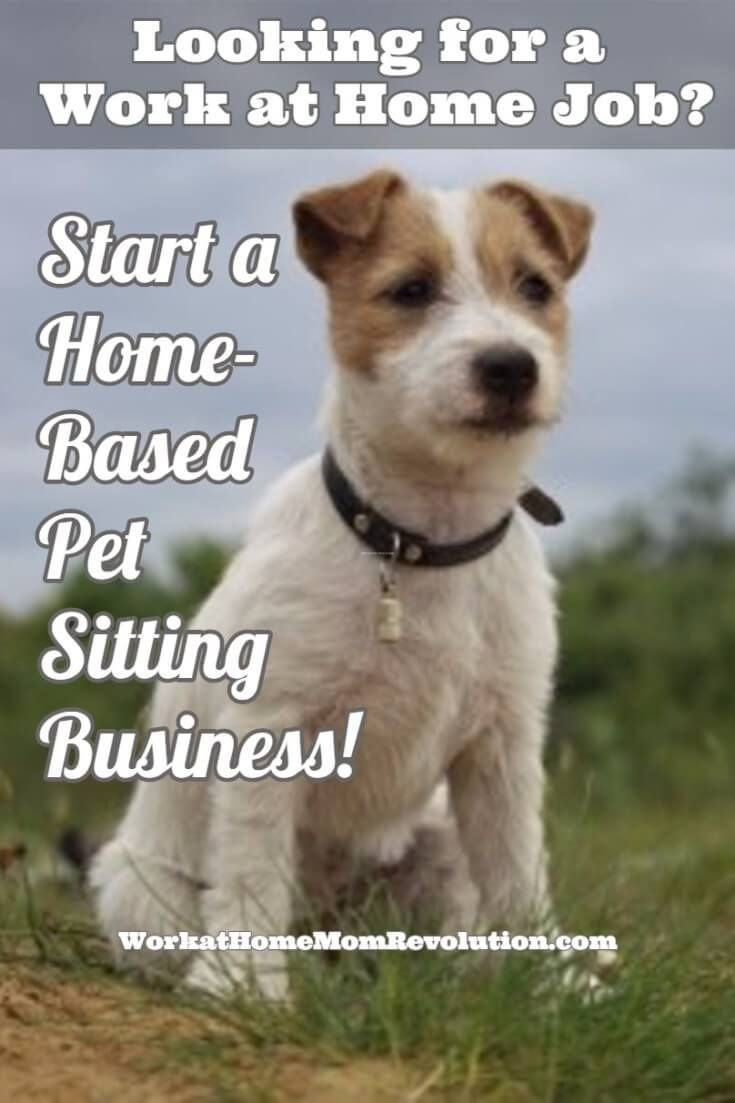 Work At Home How To Start Your Own Pet Sitting Business Pet